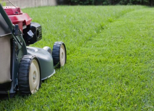 Entretien de la pelouse : le faire soi-même ou le confier à un professionnel